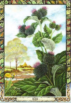 Burdock | Druid Plant Oracle by Philip and Stephanie Carr | Illustrated by Will Worthington | Meaning: autumn, cleaning and attachment | Reversed: the outcast, the scapegoat, and blame