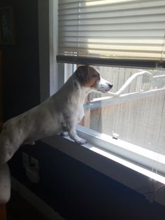 Turbo looking for those pesky squirels