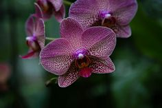 Singapore National Orchid Garden (12 of 13).jpg | Flickr - Photo Sharing!