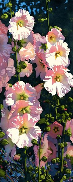 Watercolor hollyhocks by Chris Beck --- So luminous!