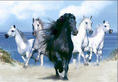 3D Pictures 3 Dimension Animal Horses Pferd Cavallo Herd | eBay