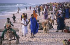 Nouakchott. OVER FISHING. Landing fish on the beach. 4,000 traditional fishing boats compete for fish - the main economic activity in Mauretania.