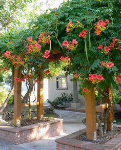 [I like the style of the lower pergola, and also the way it's set into brick planter beds.] If you're looking for something to cover an arbor, pergola or fence in your garden must check out these flowering vines! Climbing Flowers, Climbing Vines, Climbing Flowering Vines, Climbing Plants Fast Growing, Climbing Hydrangea, Campsis, Dream Garden, Backyard Landscaping, Landscaping Ideas