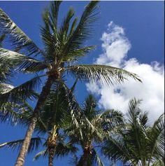 After all the rain it's a beautiful day in Hawaii. The sun has to come out eventually 🌤🌴 . . . #atDawnoahu #honolulu #hawaii #ハワイ#alamoana #paradise #palmtrees
