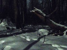 Forest under the moonlight tonight. -13,4 °C, 9PM