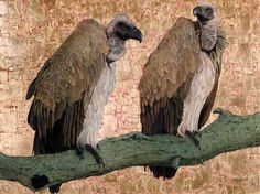 Cape Vultures, Oil and Gold Leaf on Canvas, 90cm by 120cm, (2014) by Marc Alexander