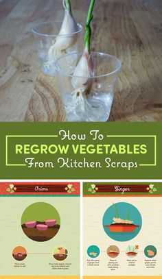 16 Foods That You Can Magically Regrow From Scraps