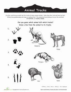 Australian Animal Tracks Worksheet