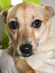 Donna Snarky DeNunzio  Only 2 shares and a dead thread...  Mercer Humane Society...Harrodsburg, KY  NINA... 2 YR OLD TAN/CREAM/WHITE CHI  Please share NOW....    MERCER HUMANE - HARRODSBURG KY - AVAILABLE DOGS - 2012  INTAKE: 3/17/12  TAN/CREAM/WHITE CHI  2 YR OLD 15 LB CHIWAWA  NINA  ACO ID #K8