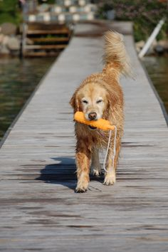 lake dog at heart.