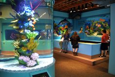 Tank types Aquarium Store, Memorial Weekend, Apps, Oregon Coast, Road Trip, Camping, Memories, Rv, Campsite