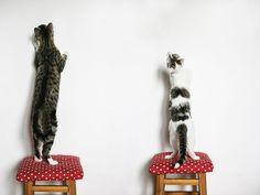 http://www.boredpanda.com/cute-cat-photography-monika-malek/