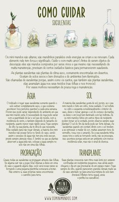 Planting Succulents, Garden Plants, Indoor Plants, Planting Flowers, Indoor Garden, Comment Planter, Plants Are Friends, Cactus Y Suculentas, Green Garden
