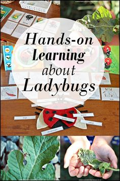 Suzie's Home Education Ideas: Hands-on Learning about Ladybugs