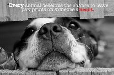 """61 Likes, 4 Comments - Help A Shelter (@helpashelter) on Instagram: """"Every animal deserves the chance to leave paw prints on someone's heart ❤️️ Who has left their paw…"""""""