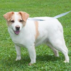 ***SUPER URGENT!!!*** - PLEASE SAVE DUCHESS!! - EU DATE: 9/5/2014 -- Duchess Breed:Collie (mix breed) Age: Adult Gender: Female Size: Medium Shelter Information: Wetzel County Animal Shelter RR 2 Box 57  New Martinsville, WV Shelter dog ID: Duchess Contacts: Phone: 304-904-2477 Name: Melissa Dinger email: moodusbass@gmail.com