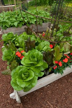 raised beds - must try this on our deck to keep the deer away!