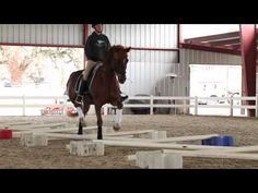 Cavaletti Training for Horses with Erika Jansson, Dressage Trainer - YouTube