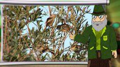 Erdő Ernő Bácsi meséi - Miért énekelnek a madarak? Bird Tree, Green Day, Birds, Christmas Ornaments, Holiday Decor, Tube, Christmas Jewelry, Bird, Christmas Decorations