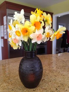 My daffodils, freshly cut
