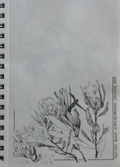 Protea Kirstenbosch.