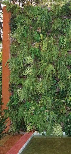 jardim vertical neorex : jardim vertical neorex:Muros verdes