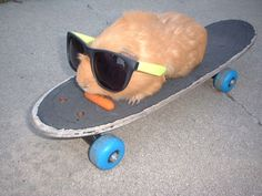 this is a guinea pig eating a carrot wearing sunglasses on a skateboard. your argument is invalid.