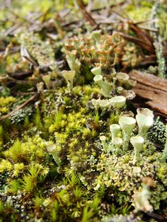 Feather & Moss Curiosities, LOOK AT THIS LICHENY WONDERLAND Growing Mushrooms, Mushroom Fungi, Enchanted Garden, Naturally Beautiful, Pixies, Faeries, Great Artists, Gnomes, Bonsai