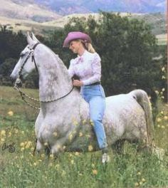 Snow Job f. 1977, Supreme Sultan X Frosty Donna by Frosty Highland. One of the original Shatner Western Pleasure horses, his gray coloring traces back to Silver Mac. (The American Saddlebred: Glorious Grays Part 2)