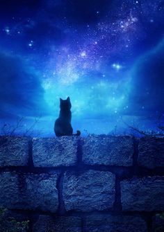 Shadow waited for the magic to happen, because Cats know about such things.