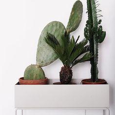 Elegant og tidløs boks fra Ferm Living. Boksen er flott å bruke til dine grønnplanter, men du kan også bruke den til bøker o.l. Materiale: Pulverlakkert metall Farge: Grå Mål: W : 60 x H : 65 x D: 25 cm Vekt 9,3 kg.