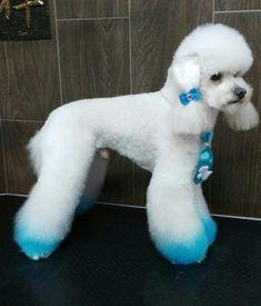 -repinned- Creative Poodle grooming