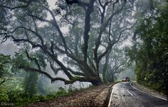 Cloud Forest (Calilegua National Park, Jujuy, Argentina) by Domingo Leiva, via 500px