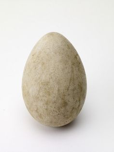 Australian Bustard Egg oh_185_drawer_8_6    For more information please visit http://blackcountryhistory.org/collections/getrecord/WEDSD_OH_185_Drawer_8_6/