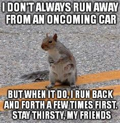 I don't always run away from an oncoming car ~~~~~~~ but when I do, I run back and forth a few times first.  Stay thirsty, my friends. ~~~~~[Dos Equis], [squirrel]