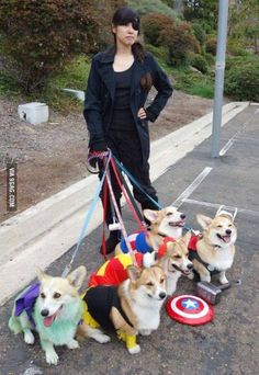 Corgi Cosplay Comment The outfits you love for Your Corgi Tag Your Friends Who would like Love This <3 #corgicosplay #corgipuppy #corgioutfits #corgicostume