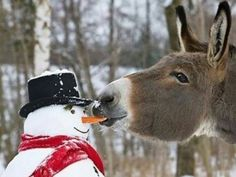 #HORSE##CUT##FUNNY##ANIMALS# #CHRISTMAS##SNOW#