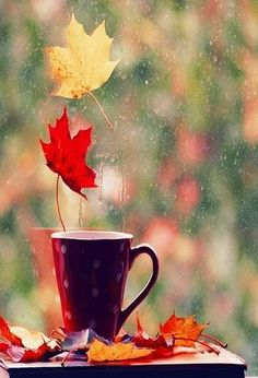 Cup of Coffee on a Autumn Day coffee autumn leaves fall autumn pics fall pics Autumn Rain, Autumn Leaves, Autumn Tea, Autumn Coffee, Autumn Morning, Morning Rain, Autumn Cozy, Friday Morning, Seasons Of The Year