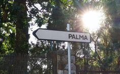 Exklusives Wohnen mit Meerblick Die noble Wohnsiedlung Son Vida liegt oberhalb der Inselhauptstadt Palma de Mallorca. Immobilien in Son Vida gehören zu den teuersten und gefragtesten Liegenschaften… Sons, Human Settlement, Real Estates, Island, Majorca, Homes, My Son, Guys, Children