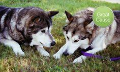 Groupon - $ 10 Donation to Texas Alaskan Malamute Rescue. Groupon deal price: $10.00