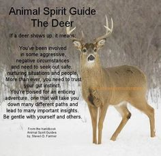 Animal Spirit Guide : The Deer: Spirit Animal , Animal Medicine, Animal . Animal Meanings, Animal Symbolism, Spirit Animal Totem, Animal Spirit Guides, Paranormal, Spiritual Animal, Animal Medicine, Power Animal, Animal Magic