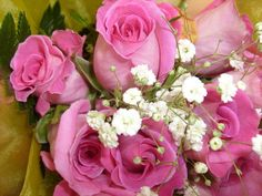 Bright Pink Roses and Baby's Breath by chippewabear, via Flickr