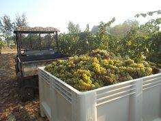 Harvest September 2013