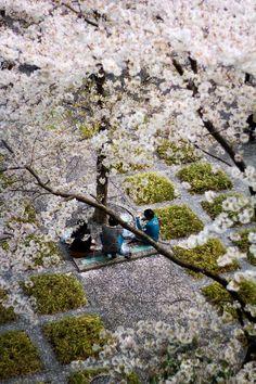 Under the Sakura tree by Abdullah Al-Zaidan on 500px