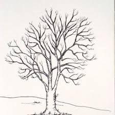 oak trees drawings - Google Search
