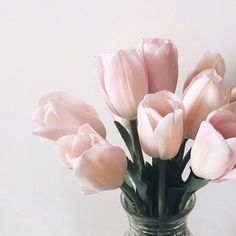 Light pink tulips                                                                                                                                                                                 More