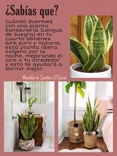 Eco Garden, Home Vegetable Garden, Natural Garden, Garden Plants, Indoor Plants, House Plants Decor, Plant Decor, Plantas Indoor, Inside Plants