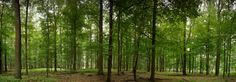 Fototapete Buchenwaldpanorama (Nr. 9724) www.berlintapete.de Planer, Nature, Design, Photos, Photo Wallpaper, Forests, Wall Papers, Photo Illustration, Naturaleza
