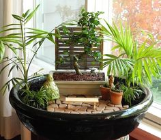 Bonsai trees work nicely in miniature gardens but keep them in their own pots for ease of care.
