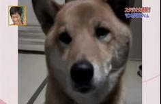 This Brilliant Dog Knows When to Use His Indoor Voice (VIDEO)